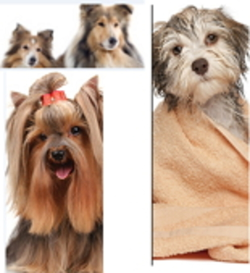 Product picture Become A Dog Groomer
